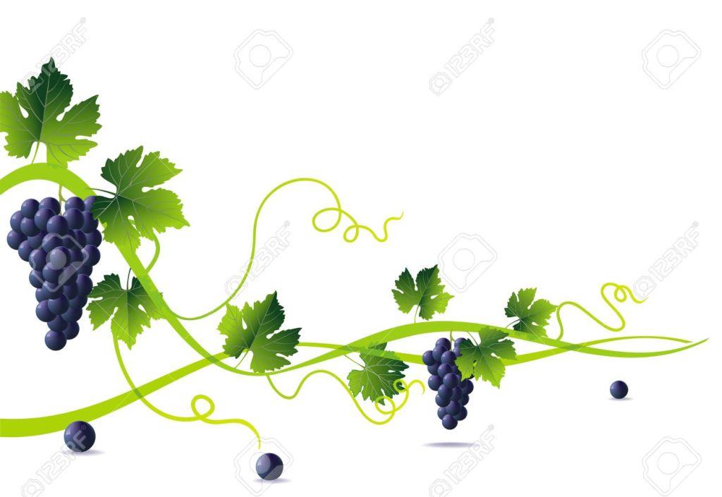 yo soy la vid, produzcan frutos en mi. Jn 15, 1